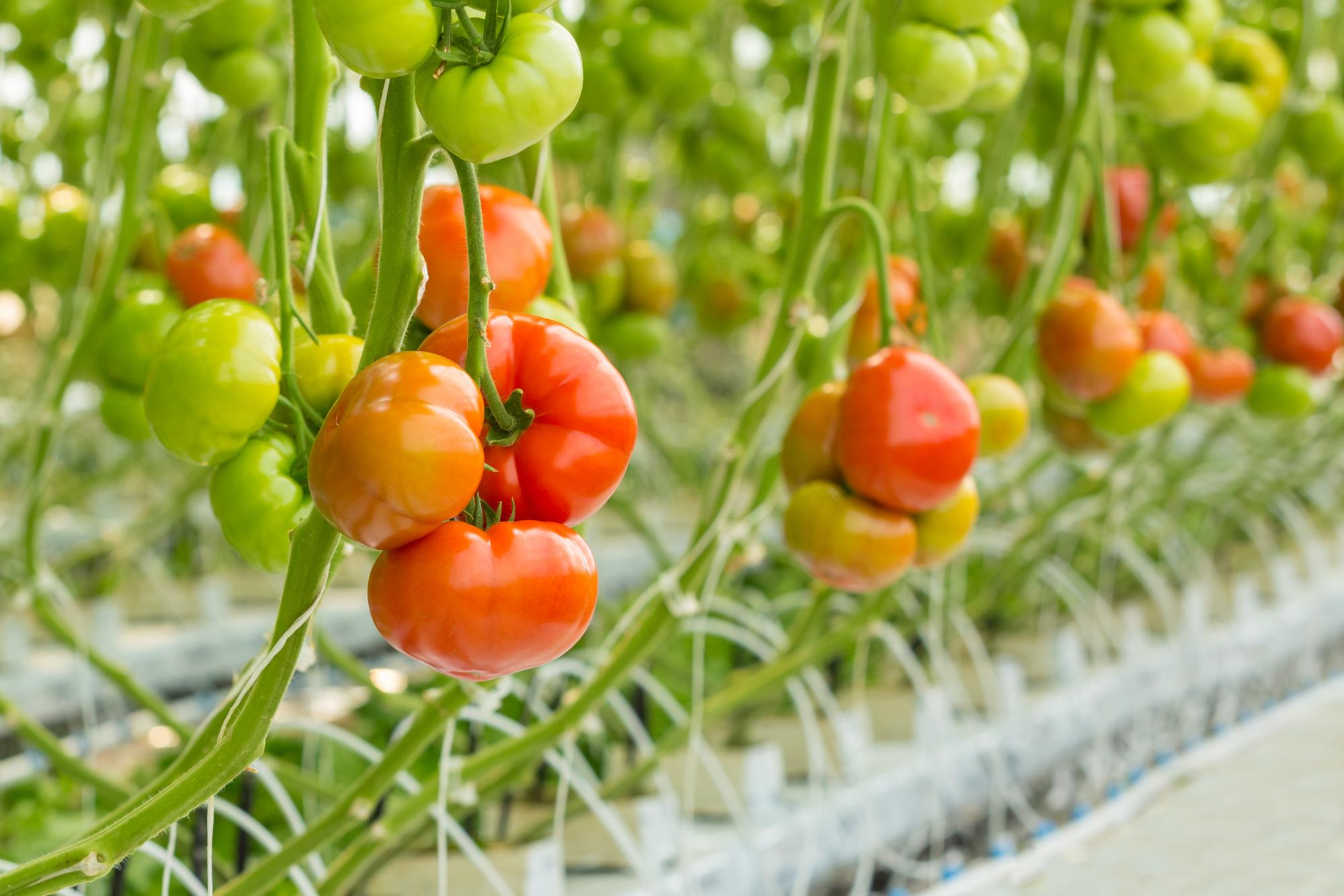 Võiste Gardening Automation